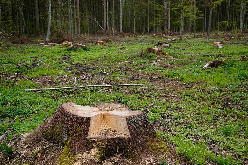 tala-bosques-drones-uso-florestal